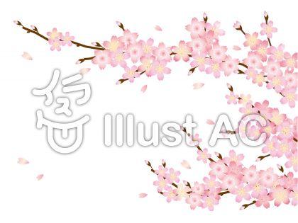 桜の花びらと枝