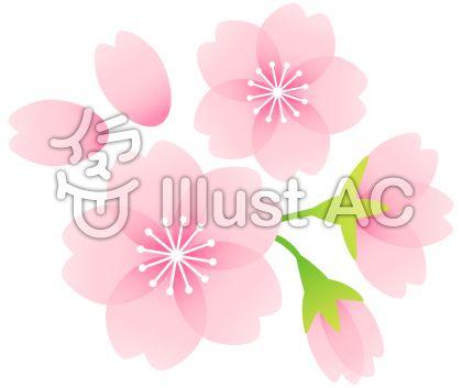 桜素材07