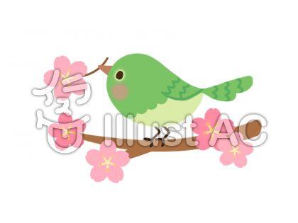 メジロと桜の枝