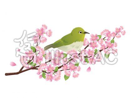 メジロと桜の木の挿絵・イラスト02