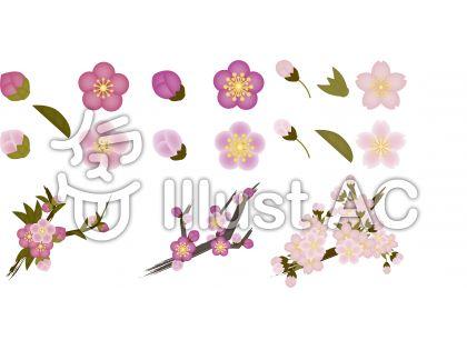 桃・梅・桜セット