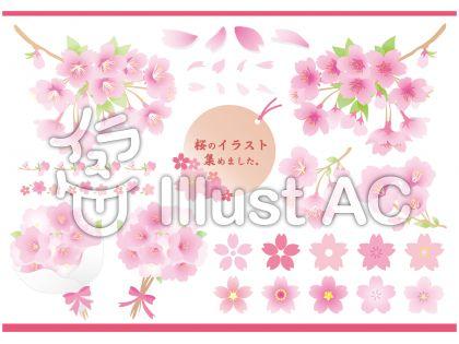 桜のイラスト集