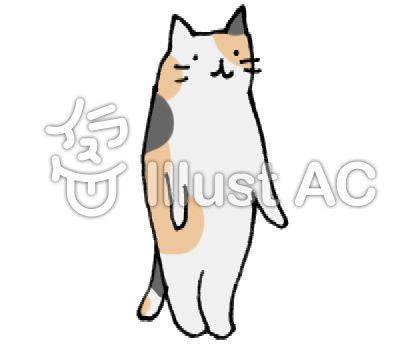 立っている猫