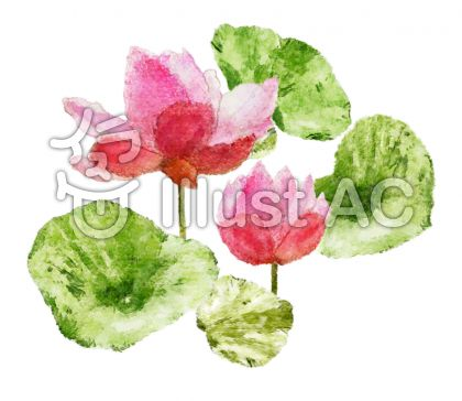睡蓮の水彩画の壁紙