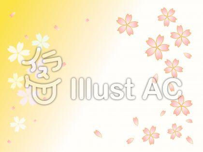 桜の花びら 黄色と白の背景
