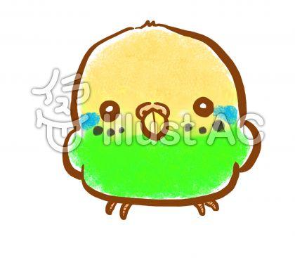 セキセイインコ 緑ちゃん
