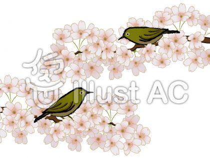 和風 めじろと桜の花