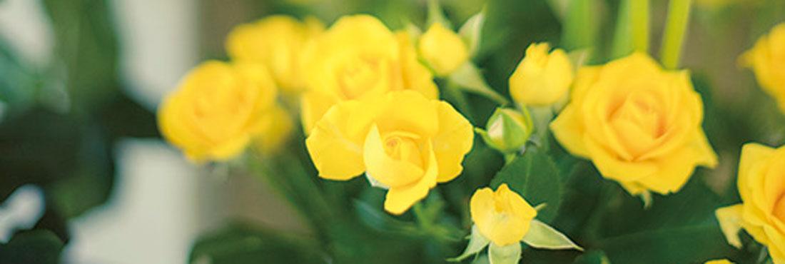 Flower&Cafe Niyok