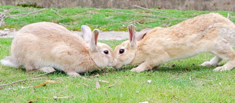 【後編】「島根&広島で行く、体験女子旅」。ノスタルジックな町並みや野生ウサギの棲む島で、たっぷり癒される!