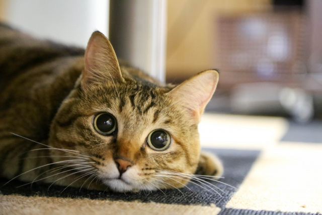 今日は何の日 2月22日は「猫の日」