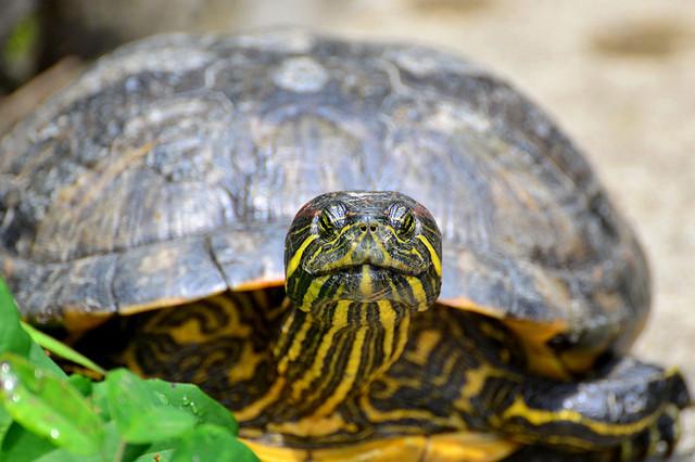 今日は何の日 5月23日は「World Turtle Day/世界カメの日」