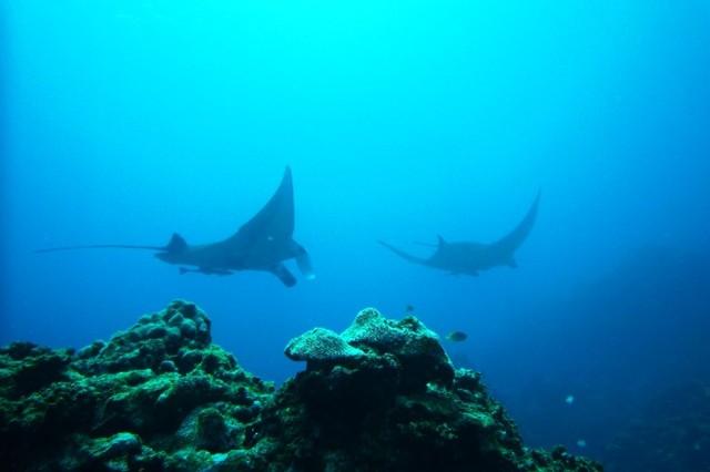 今日は何の日 6月8日は「世界海洋デー/World Oceans Day」