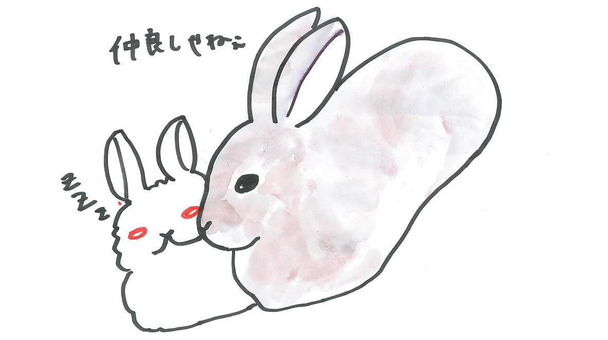 プロが教える!明日からウサギと暮らすため講座「 『hare(ノウサギ)』『rabbit(アナウサギ)』は別の生き物」