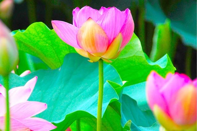 自分のできないこと・できること・すべきこと:仏陀の教え