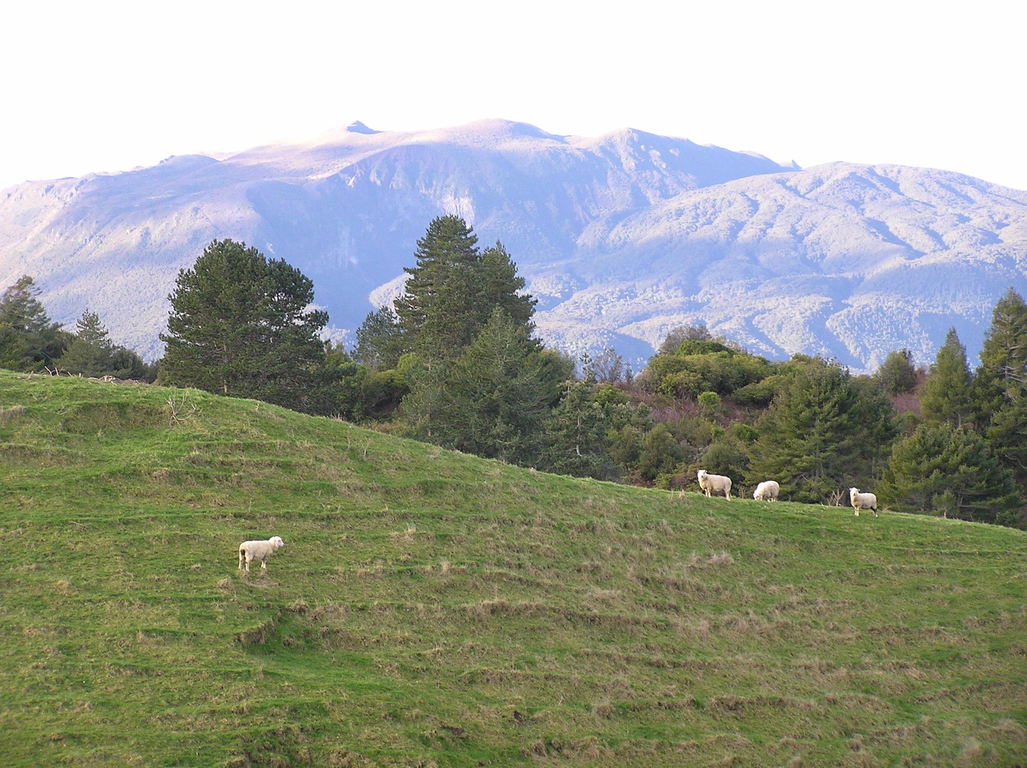 ニュージーランド経済を考察すると