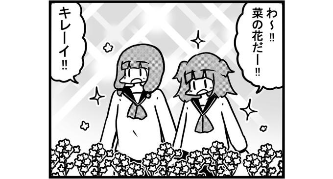 第1062話 女流雀士と菜の花