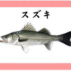 スズキ(魚)