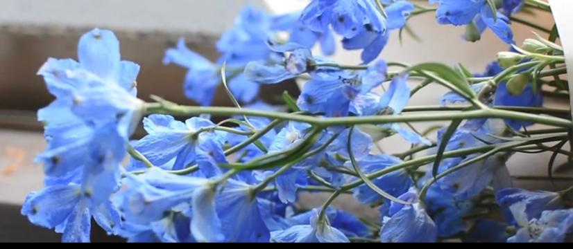 あの花みたいに生きられたら