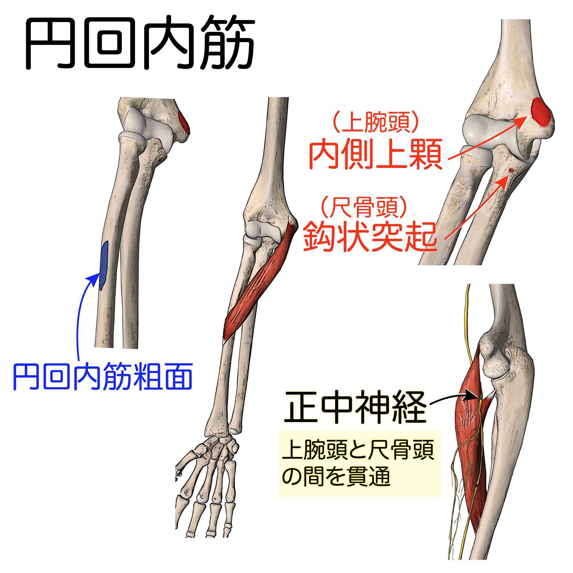 骨折 上 腕骨 顆 上