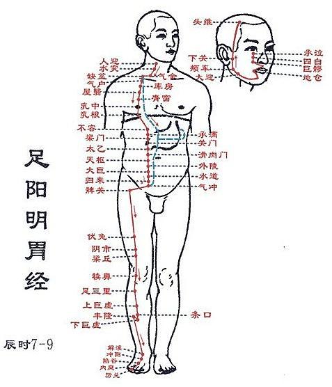 「十 二 経絡 図 手陽明大腸経の穴位」の画像検索結果