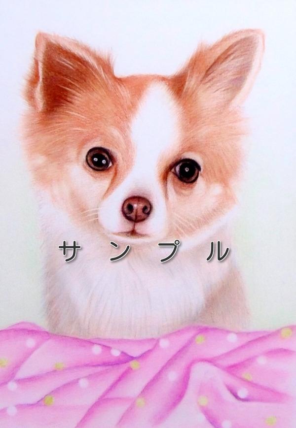 色鉛筆画 犬