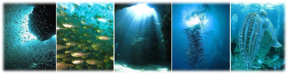 講習は石垣島の海