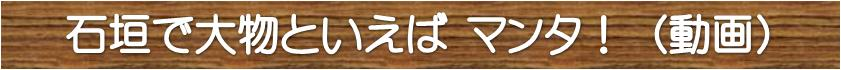 石垣島のマンタ動画