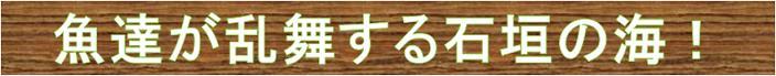 魚が乱舞する石垣島