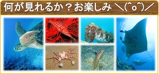 楽しみな石垣島の海をご紹介