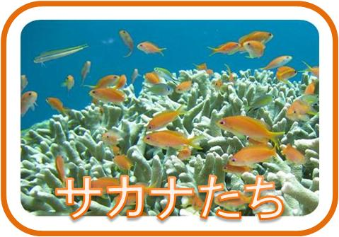 石垣島の可愛い魚たちページ