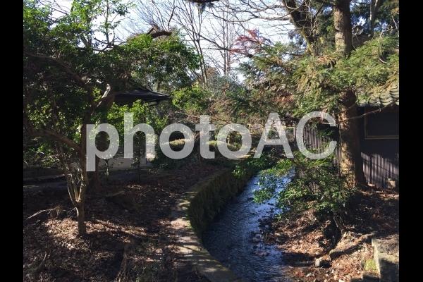 金鱗湖4の写真