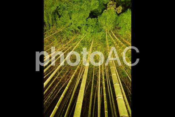 京都嵐山・竹林ライトアップ3の写真