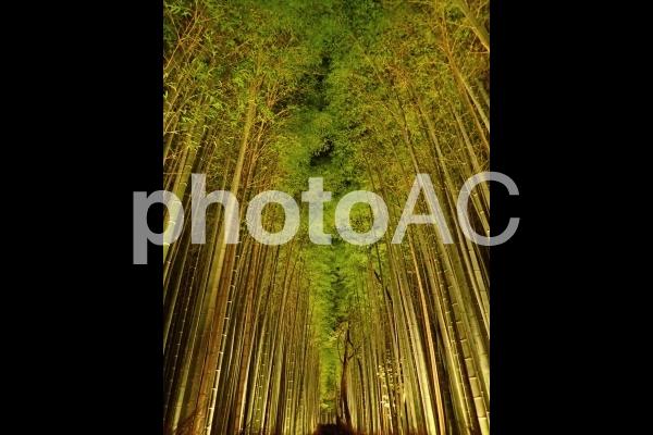 京都嵐山・竹林ライトアップ2の写真