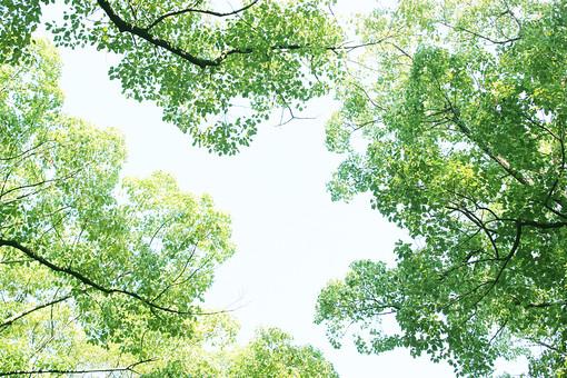 緑の木々1の写真
