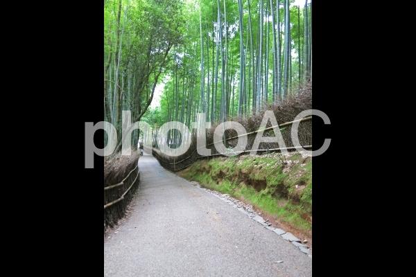 京都嵐山・竹林の小径6の写真