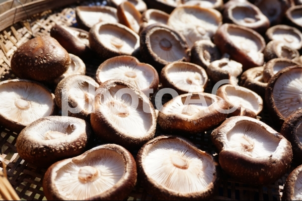 椎茸の写真