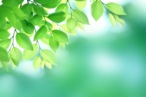 新緑イメージの写真