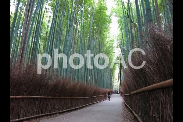 京都嵐山・竹林の小径7の写真