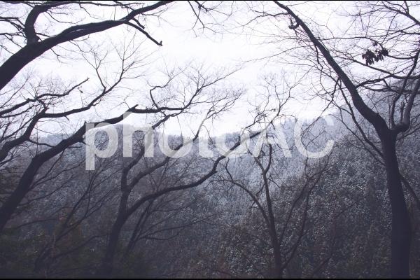 冬山の景色の写真