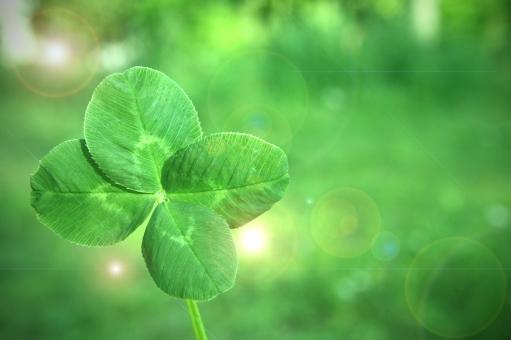 四葉のクローバー 四葉 green グリーン 緑 緑色 キラキラ 光 草花 葉っぱ ハッピー HAPPY 画像加工 加工 幸せ ヨツバ 雑草 公園 摘む よつば 道ばた 草原 自然 幸福 葉 しおり 探す 見つける 季節 春