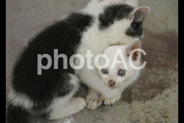 岩猫兄弟4の写真