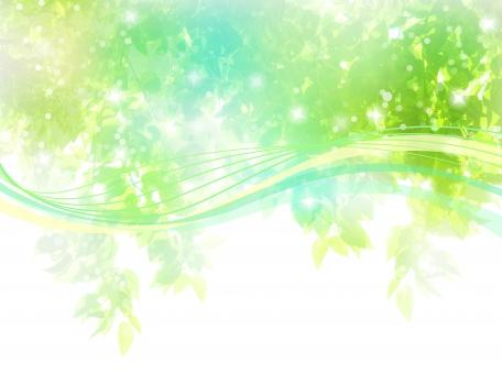 新緑と風の写真