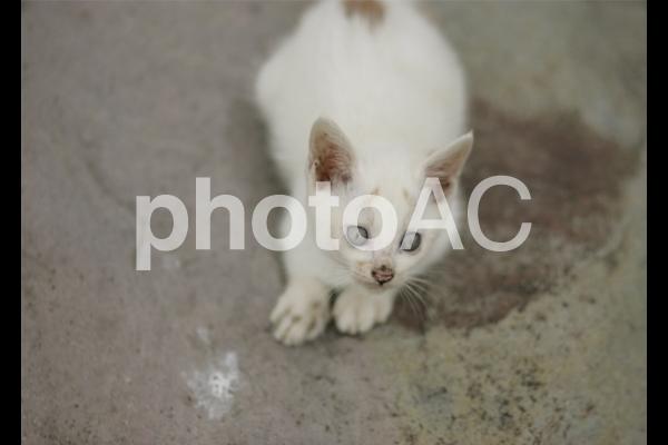 岩猫兄弟9の写真