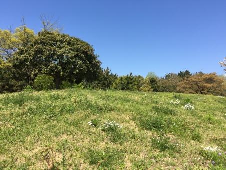 神戸の青空の写真