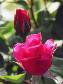 真っ赤に咲いたの写真