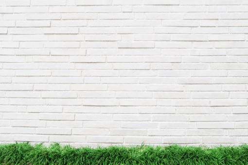 白壁と緑の写真