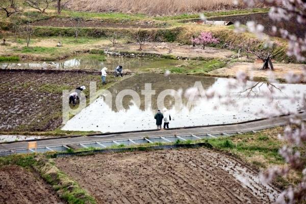 棚田では大きな田んぼの畦塗りの写真