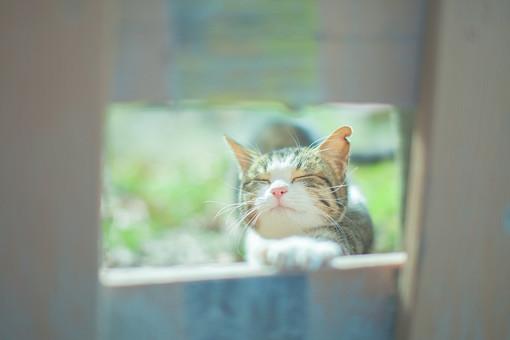 猫の散歩5の写真