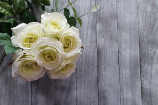 白いバラの写真