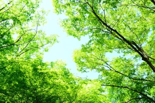 新緑 5の写真
